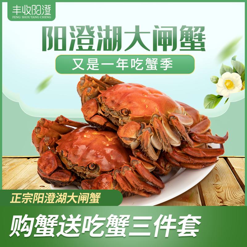 【发货日期:9月22日-1月16日】丰收阳澄大闸蟹999型FSYC999
